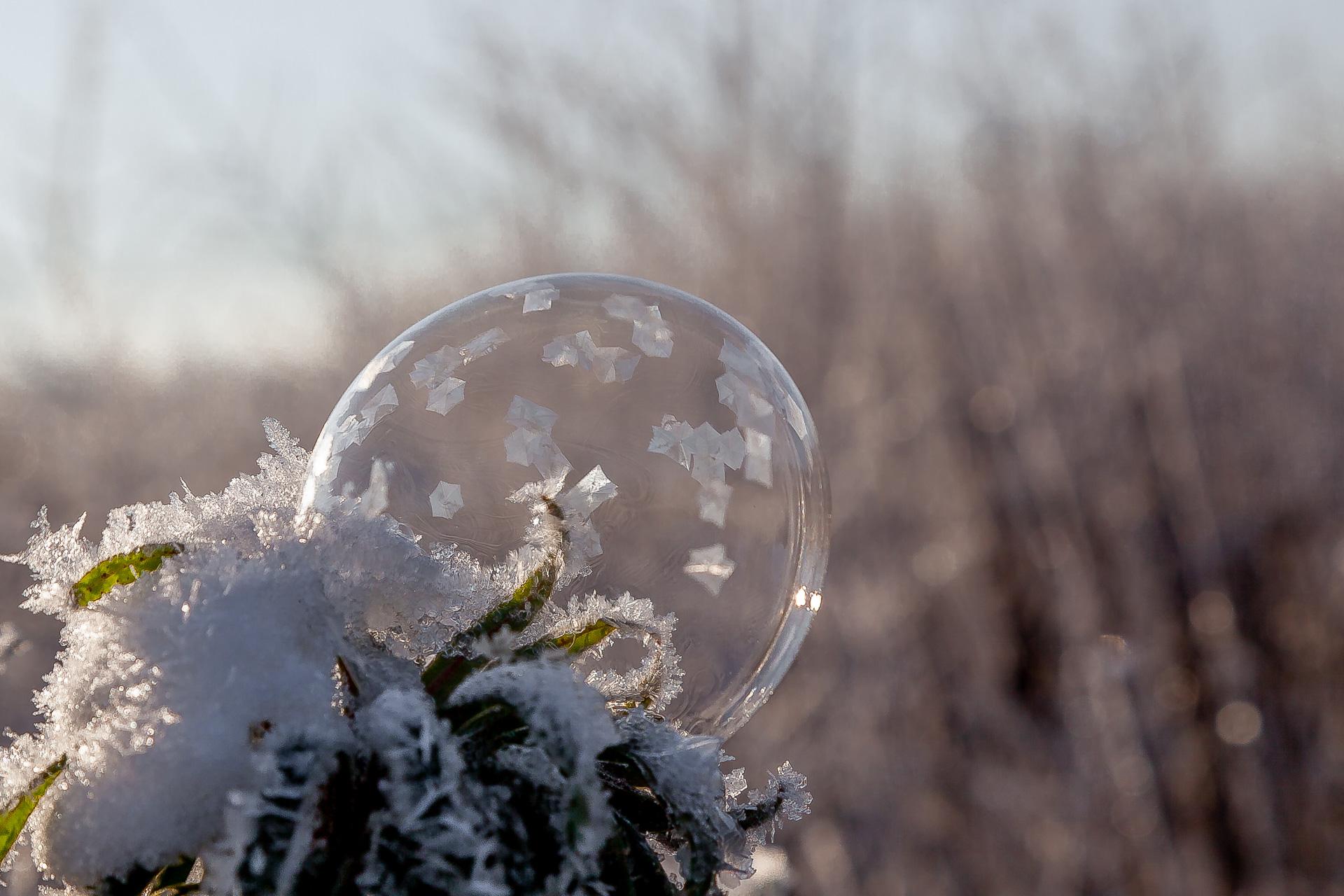 Gefrorene Seifenblase auf Busch bei Gegenlicht