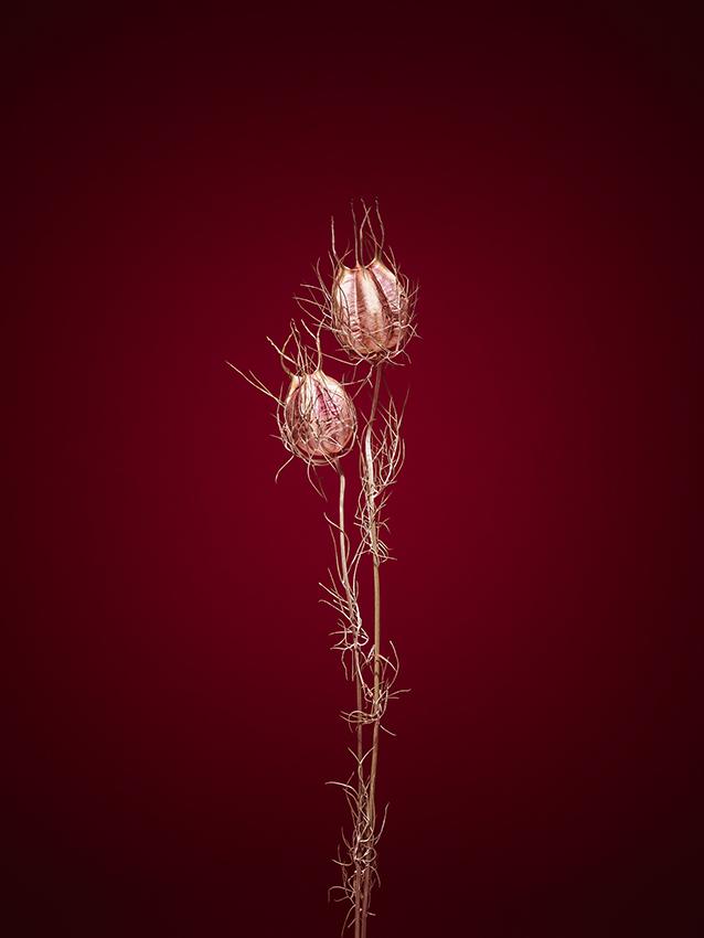 © Jan Prengel, Germany, Shortlist, Professional competition, Still Life, Sony World Photography Awards 2021_6