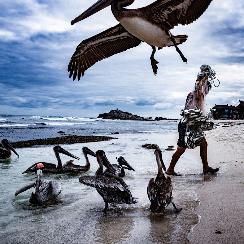 Pelikane am Strand mit einer Person, aufgenommen von Unterwasser-Foto Frau vor dunklem Hintergrund von Thomas Kretschmann